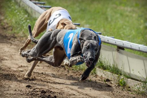 Greyhound race, for 'Hvad er kryptovaluta'